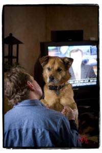 colorado dog photographer matt lit